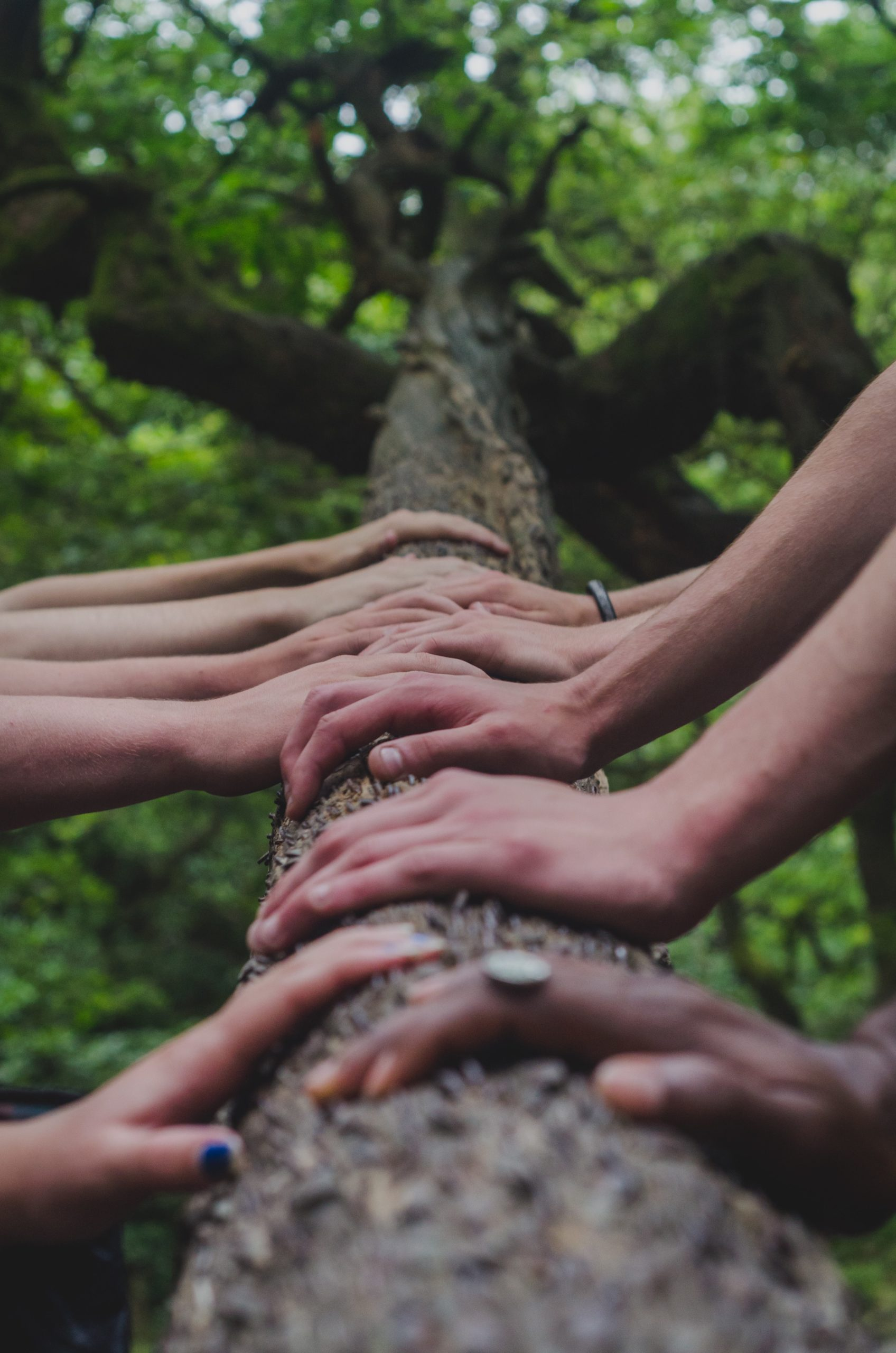 multi-racial womens hands touching tree trunk by Shane Rounce